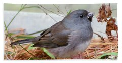 Beach Towel featuring the photograph Wild Birds - Dark-eyed Junco by Kerri Farley