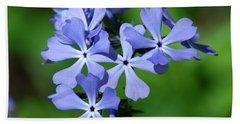 Wild Blue Phlox Dspf0388 Beach Sheet by Gerry Gantt