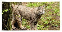 Wild Bobcat Beach Towel by Teri Virbickis