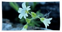 Beach Towel featuring the photograph Wild Chickweed by Ann E Robson