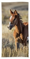 Wild Colt In Sand Wash Basin - Northwest Colorado Beach Sheet