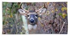Wild Deer Beach Sheet