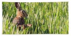 Wild Hare Bathing In The Morning Sunlight Beach Towel