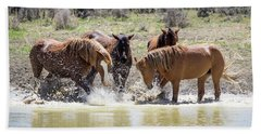 Wild Mustang Stallions Playing In The Water - Sand Wash Basin Beach Sheet