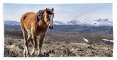 Wild Mustang Filly Of Sand Wash Basin Beach Sheet