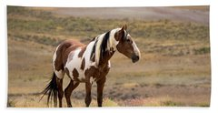 Wild Mustang Stallion Picasso Of Sand Wash Basin Beach Sheet