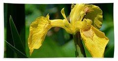 Wild Yellow Iris Beach Sheet by Kathy Eickenberg