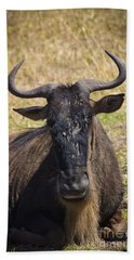 Wildebeest Taking A Break Beach Towel by Darcy Michaelchuk