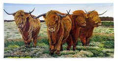 Windswept Highland Cattle  Beach Towel