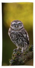 Winking Little Owl Beach Towel