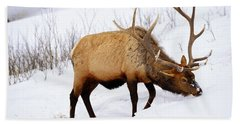 Beach Towel featuring the photograph Winter Bull by Greg Norrell
