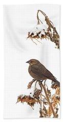 Winter Cowbird On Sunflower Beach Sheet