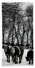 Winter Cows Beach Towel