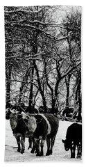 Winter Cows Beach Sheet by Elaine Hunter