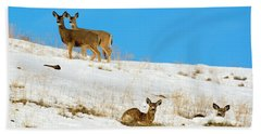 Beach Towel featuring the photograph Winter Deer by Mike Dawson