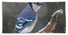 Beach Sheet featuring the photograph Winter Jay by Mircea Costina Photography