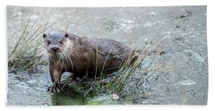 Winter Otter Beach Towel