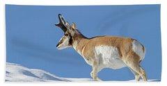 Winter Pronghorn Buck Beach Towel