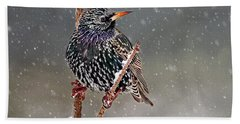 Winter Starling 2 Beach Sheet