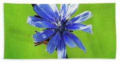 Wisconsin Blue Chicory Flower Beach Towel