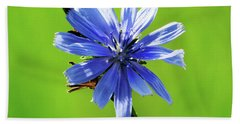 Wisconsin Blue Chicory Flower Beach Sheet