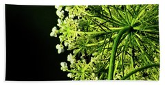 Wisconsin White Queen Anne's Lace Beach Towel