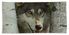 Wolf In The Birch Trees Beach Towel
