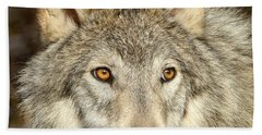 Wolf Portrait Beach Towel by Jack Bell