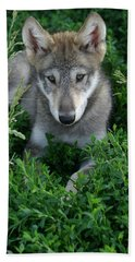 Beach Towel featuring the photograph Wolf Pup Portrait by Shari Jardina