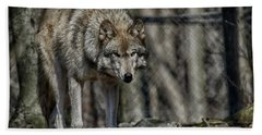 Wolf Stalking Beach Towel