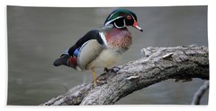 Wood Duck Drake Beach Towel by Gary Hall