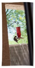 Woodpecker Having A Drink Beach Towel by Carolina Liechtenstein