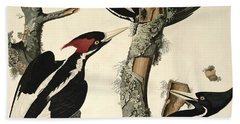 Woodpecker Beach Towel by John James Audubon