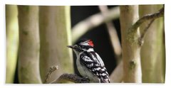 Downy Woodpecker Beach Sheet