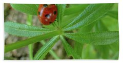 Beach Towel featuring the photograph World Of Ladybug 3 by Jean Bernard Roussilhe
