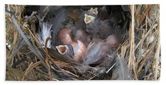 Beach Towel featuring the photograph Wren Babies by Angie Rea