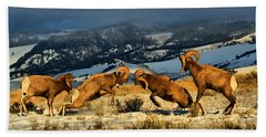 Wyoming Bighorn Brawl Beach Towel