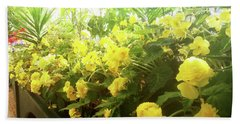 Yellow Begonias Bloom In The Hothouse Beach Towel