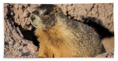 Yellow-bellied Marmot - Capitol Reef National Park Beach Towel by Gary Whitton
