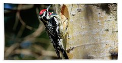 Yellow-bellied Sapsucker 2 Beach Towel by Gary Hall