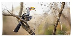 Yellow-billed Hornbill Sitting In A Tree.  Beach Sheet by Jane Rix