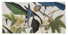 Yellow-billed Magpie Stellers Jay Ultramarine Jay Clark's Crow Beach Towel by John James Audubon