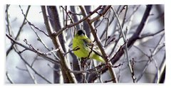 Beach Towel featuring the photograph Yellow Finch by Bonnie Muir