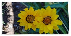 Gazania Rigens - Treasure Flower Beach Sheet