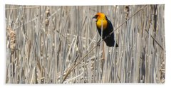 Yellow-headed Blackbird Beach Towel by Kathy M Krause