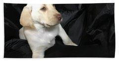 Yellow Lab Puppy Sadie Beach Towel