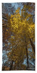 Yellow-leaves-maple-forest Beach Towel