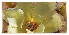 Yellow Magnolia In Full Bloom Beach Towel