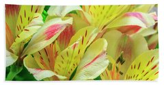 Yellow Peruvian Lilies In Bloom Beach Towel