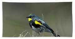 Beach Sheet featuring the photograph Yellow-rumped Warbler by Mike Dawson